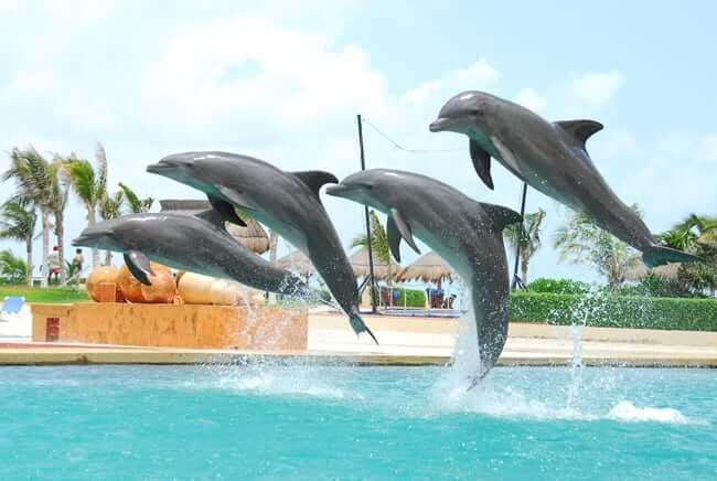 Golfinhos em parque em Cancún