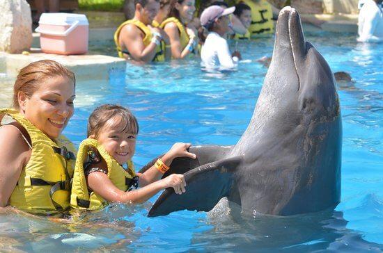 Família brinca com golfinho em Cancún