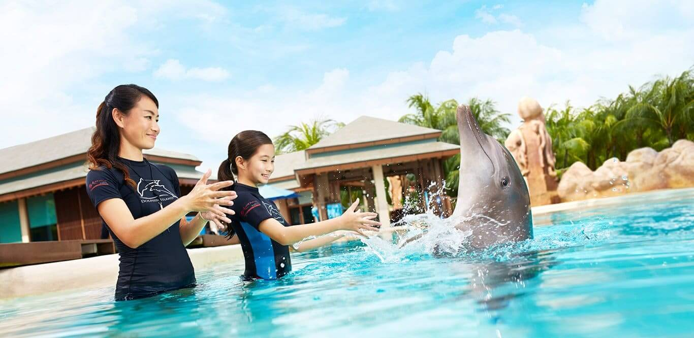 Dolphin Interactive Program no Dolphinaris Park