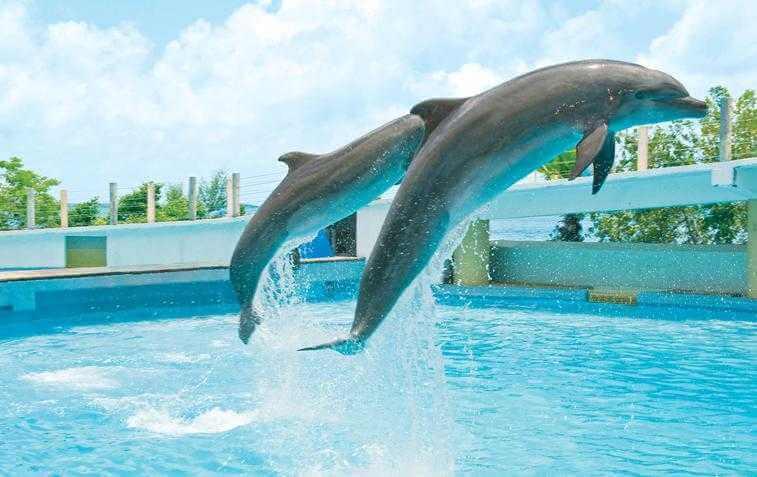 Nado com os golfinhos no Interactive Aquarium Cancún
