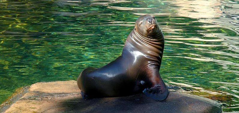 Nado com os leões marinhos no Interactive Aquarium Cancún