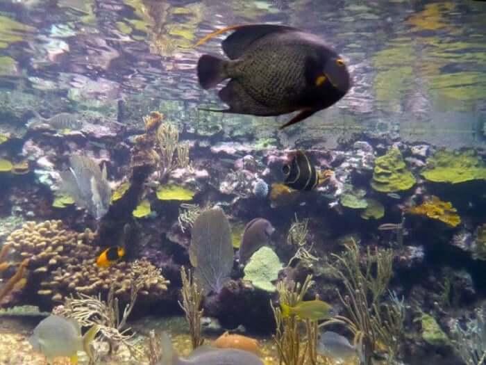 Principais atrações do Parque Xcaret em Cancún: Coral Reef Aquarium