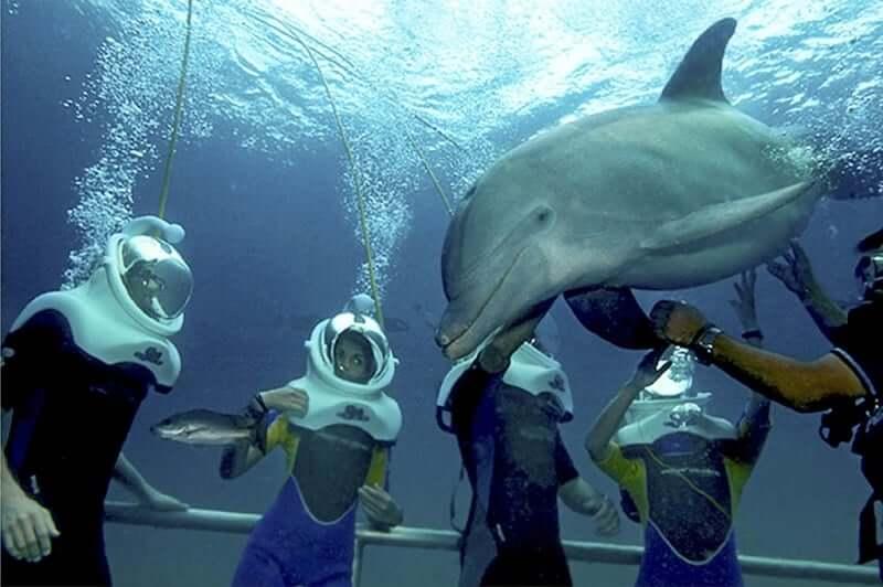 Atrações no Parque Xel-Há em Cancún - Nado com os golfinhos